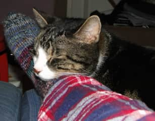 """""""Sorry boss, I couldn't get up, the cat was cuddly."""""""
