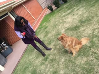 Play time with delightful rescue dog, Honey whilst house sitting in the beautiful Barossa Valley, South Australia.