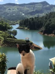 Lovely cat in Guatape colombia, of course he runs the place