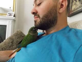 Sunny the parakeet nuzzling Jordan's chin.
