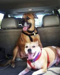 Roxanne's dog's Nala and Grover