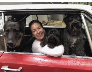Collecting cars- our dogs love to go for a spin!