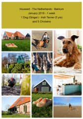 Housesit 1 Dog and 5 Chickens - Bakkum - The Netherlands - 2019