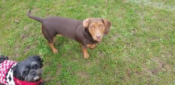 Freddy, one of my regular dogs I take walking
