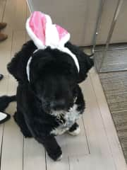 Our friend, BoBo Bailey, celebrating Easter and her birthday.