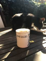 Cup of tea with Mittens
