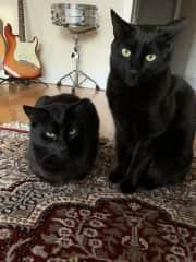 Cedric (L) and Fitz (R)