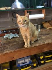 Willie in the workshop