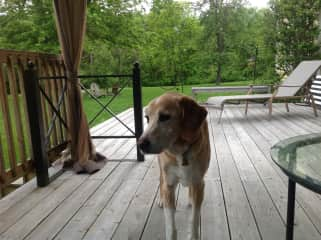 Our dog Trot...who passed away last Fall.