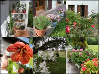 Flowers and plants in my garden