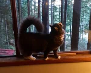 Nature Cat!