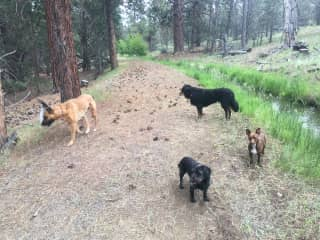 The kids: Bodhi, Valentino, Delilah, and Kona on the trails behind the house.
