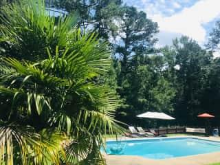palm trees + poolside views