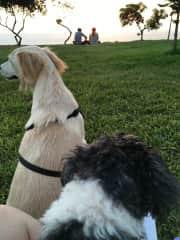 Bella and Bob chilling at the park