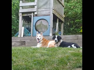 Our dog Tallulah and houseguest Max