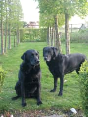 molly and poppy in the garden