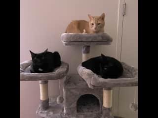 Riggs (top), Midge (left), Bex (right)