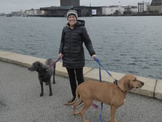 Jen, Rocky and Flash - Copenhagen sit 2019