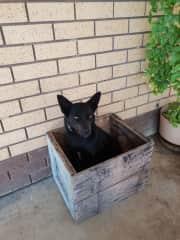 Ebonny in her favorite box