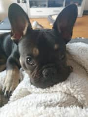 Nero while resting