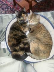 Sugar and Spice - two of our cats!
