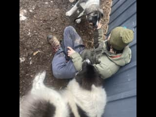 Jeremy with Tallulah and Bear, two goat herding dogs