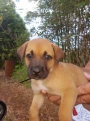 Sally as a puppy