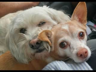 Our pets. Molly (a rescue from Cozumel Mexico) and Lucy (another rescue)