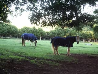 Caring for our horses