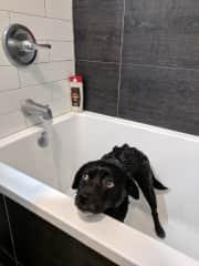 Ollie in the bath!