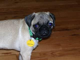 Puppy mom syndrome, photos galore