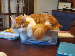Jordan's school box was the perfect size for a napping spot.