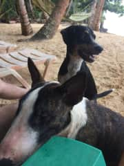 Local dogs in Nicarauga