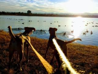 Walk at the pond (Denver, Colorado USA)