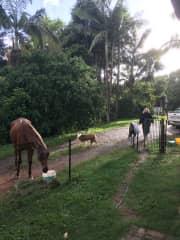 Sheryl's farm we house sat-horses n dog