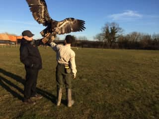 Phil flying an eagle