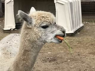 Um, sure, ...You can keep the carrot...