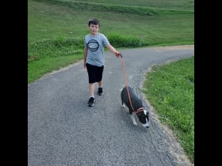 Hayden walking shelter doggie