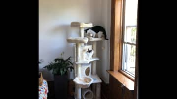 Cat tower. Gizzy loves. We also have a large Peace Lily in a self-watering planter.