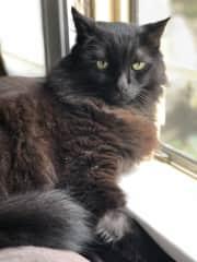 Misiu on the window sill