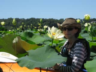 kayaking in the waterlilies