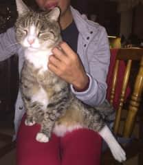 Me and my beautiful 3 legged boy Tygrys (Tiger in Polish)