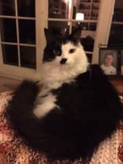 My rescue kitty - Sigo (I follow in Spanish because he followed me everywhere)
