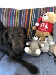 Sammy with his stuffed animals