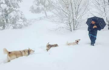 Peanut leading the way in the snow!
