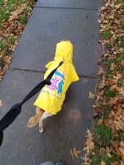 Rainy walks with my family pet, Archie <3