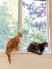 Both Finn (left) and Julip