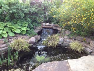 Our waterfall pond, otherwise known as our koi and frog sanctuary