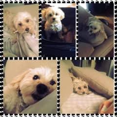 My Grand dog Rocky who visits grandma