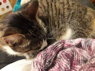 Squirtle 'helping' with my knitting.